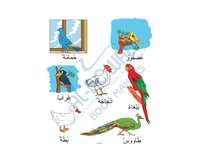 الطيور by ayshah >>>