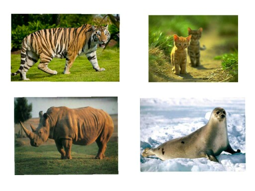 animales2 by Africa Barba
