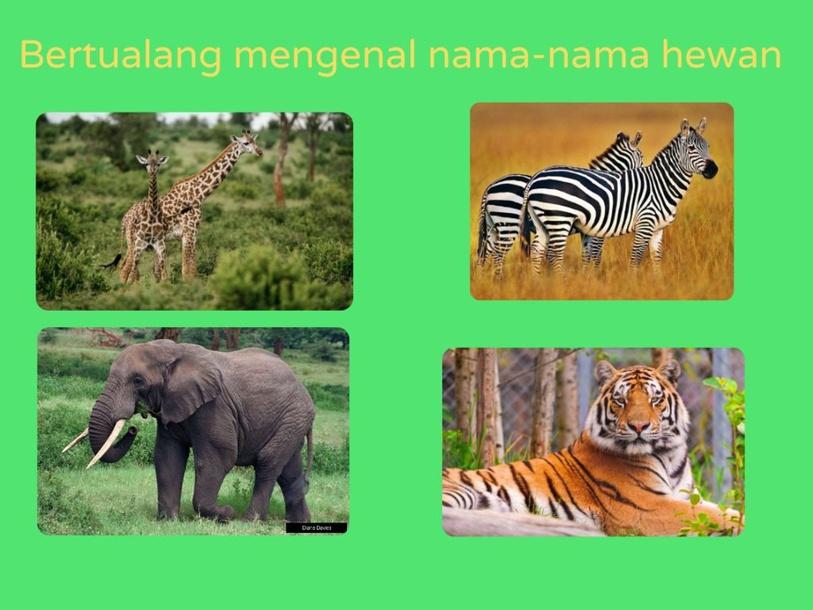 bertualang sambil mengenal nama hewan by Umi Nawal Thuba