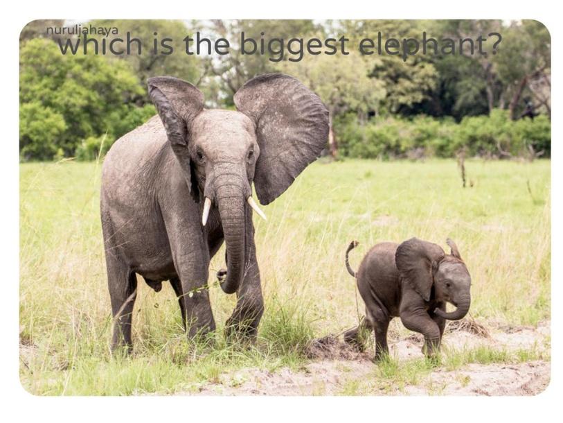 big and small by nurul jahaya