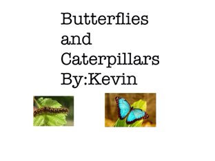 butterflies and caterpillars by Room 207