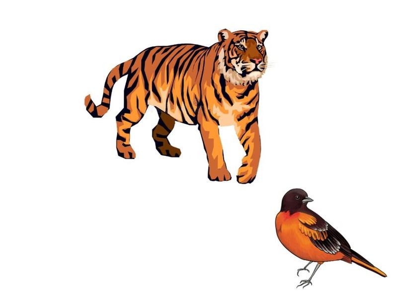 hayvanlar by Nazire Yıldır