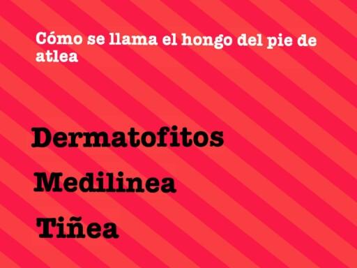 hongos by Alejandro null