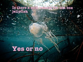 jelly by Oof head