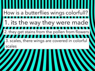 lk 8 butterfly quiz by Courtney Durbin