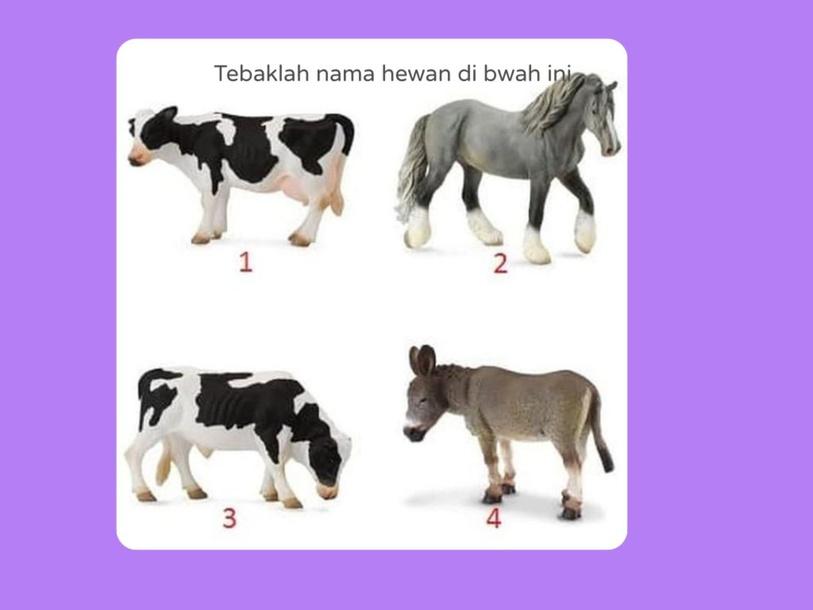 macam hewan ternak by Angelia Theresia Paud B
