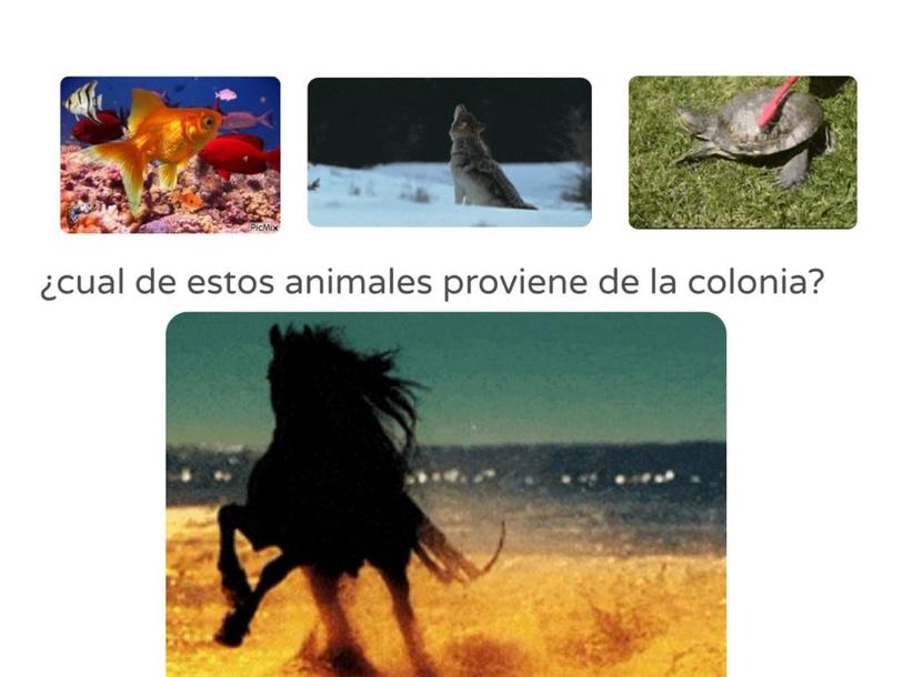 ¿que animal proviene de la colonia? by Leonardo Herroz Castro