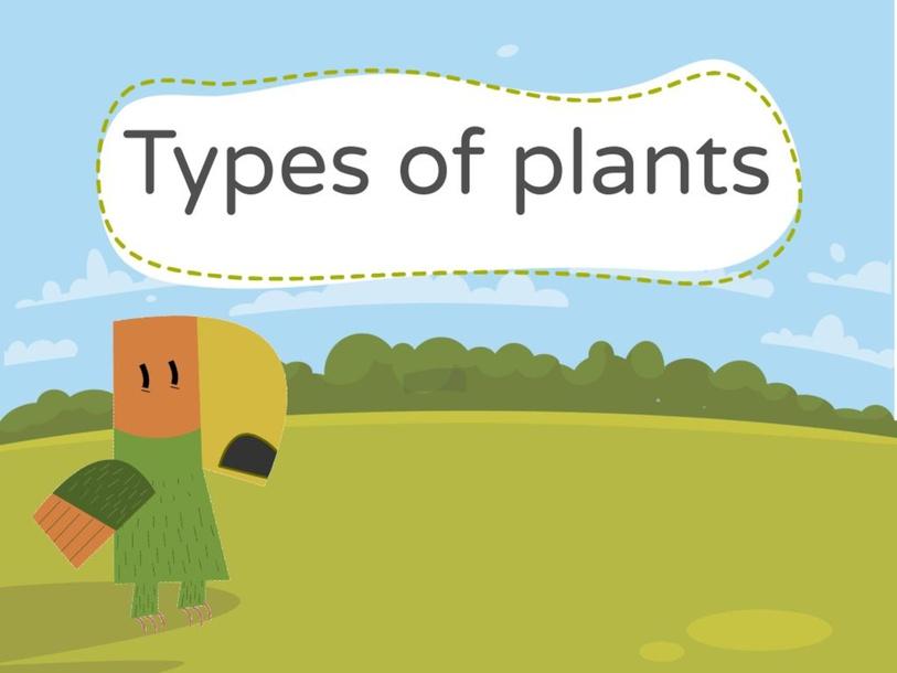 types of plants by Hajer qasem
